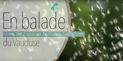 Consulter la vidéo de présentation des Espaces Naturels Sensibles de Vaucluse réalisée par le CD84
